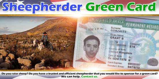 Sheepherder Green Card
